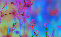 Painterly Foliage series (3) (click image to open)